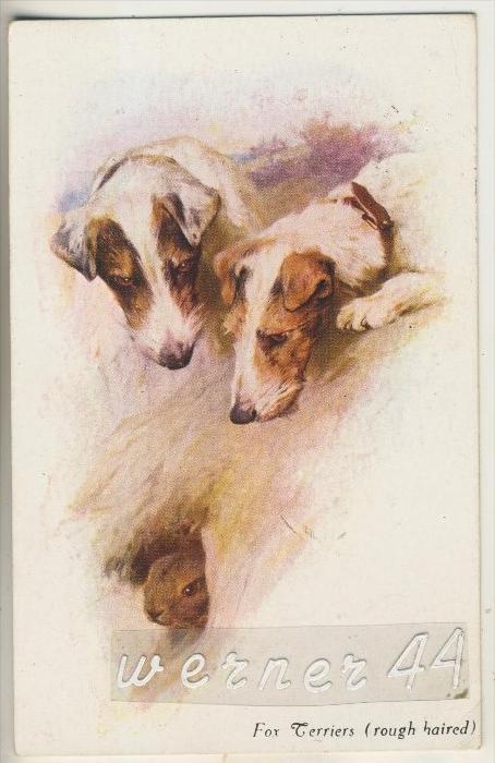 2 Fox Terrier mit einem Kaninchen was aus dem Bau raus sieht v. 1916  (5599-17)