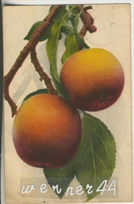 Ein Apfelzweig mit 2 Äpfel v. 1903  (35327a)