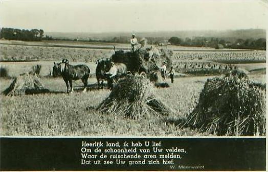 Niederlande v. 1941 Getreideernte -- siehe Foto !!  (25046)