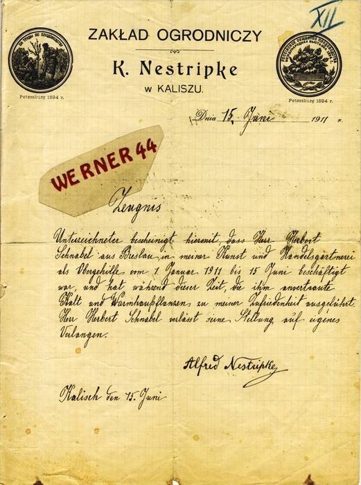 Kaliszu v. 1911 K, Nestripke -- ZEUGNIS --  siehe Foto !!   (109)