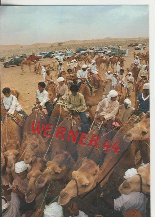 Jordanien v. 1978   Camel Race---  siehe Foto !!   (29148)