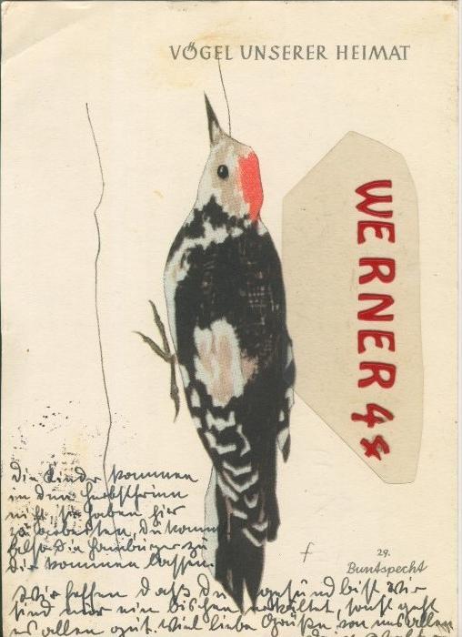 Jugendherberggroschen-Spende-Karte v. 1956     --  siehe Foto !!  (30100)