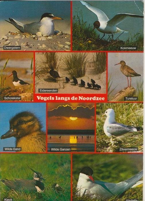 Vögel lang der Nordsee v. 1987    (41165)