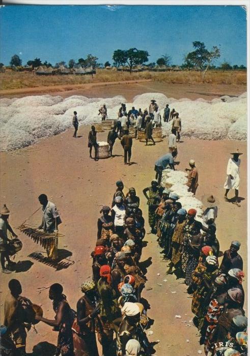 Nigeria v. 1974  Die Baumwoll Ernte (41572)