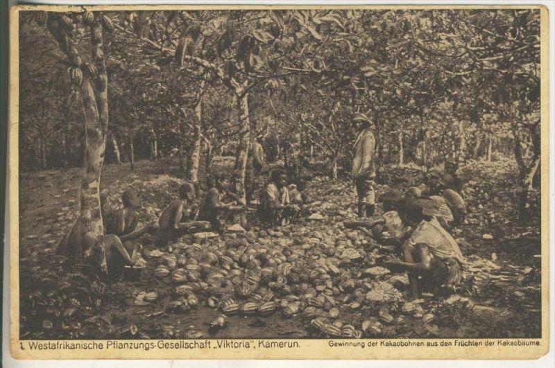 Kamerun v.1914Westafrikanische Pflanzungs-Gesellschaft, Gewinnung der Kakaobohnen aus den Früchten der Kakaobäume (670)