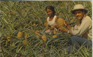 Martinique v. 1974  Ananas-Anbau  (53769)
