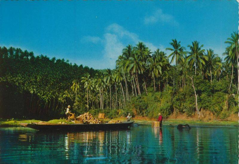 Coconut Harvest in Laguna v. 1974   (55352)