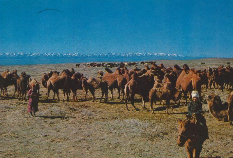 South Gobi / Mongolie v. 1974