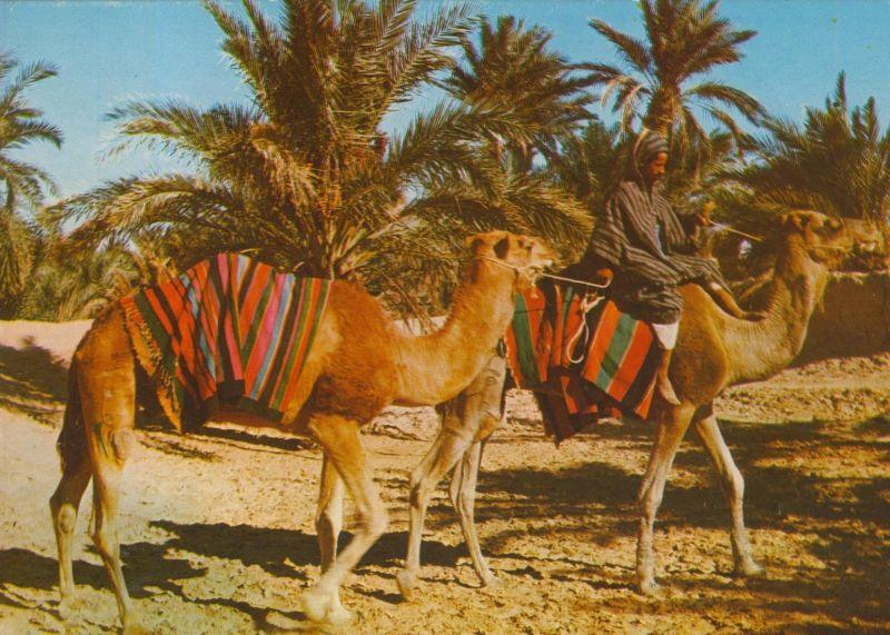 Afrika / Sahara v. 1976  Kamelreiter  (56006)