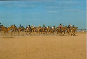Dubai v. 1978  Camel race  (55304)