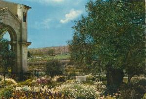 Jerusalem v. 1974  Garden of Gethsemane  (55384)