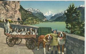 Flüelen v. 1932  St. Bernhard Zwinger,Zwing Uri  (43304)