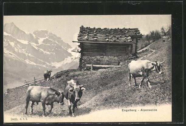 AK Engelberg, Kühe auf der Alpenweide 0