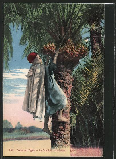 AK Arabischer Junge pflückt Datteln vom Baum 0