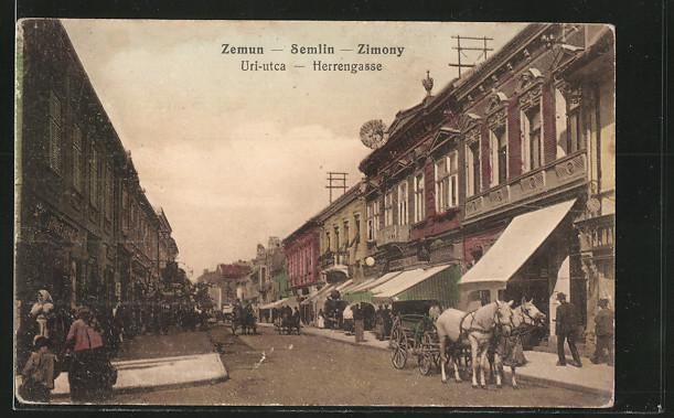 AK Zemun, Uri-utca, Herrengasse, Strassenansicht mit Pferdewagen 0