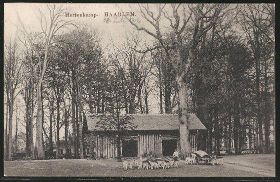 AK Haarlem, Hertenkamp