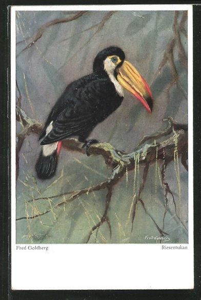 Künstler-AK Wohlgemuth & Lissner, Primus-Postkarte No.03386: Riesentukan auf einem Ast