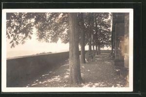 AK St. Chrischona, Terrasse mit Bänken und Bäumen