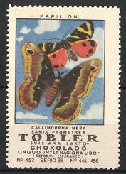 Reklamemarke Tobler Suisiana Lakto Chokolado, Papilioni, Callimorpha Hera Schmetterling