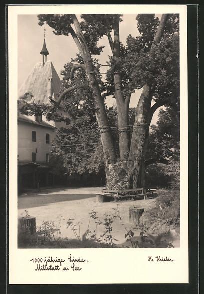 AK Millstatt a. See, 1000jährige Linde