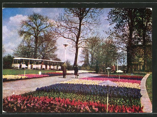 AK Erfurt, 10 Jahre Internationale Gartenbau-Ausstellung d. DDR iga 1961-1971, iga-Express bei den Hyazinthenbeeten