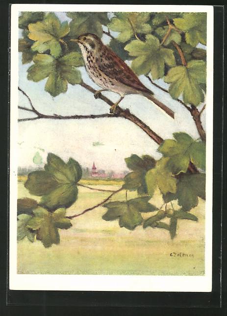 Künstler-AK Jean Zeltner: Matacillidae, Anthus trivialis, Baumpieper