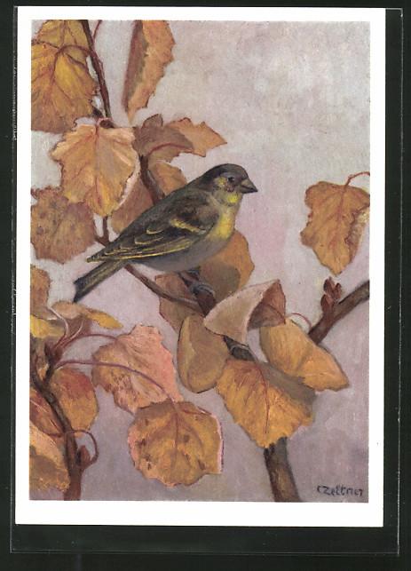 Künstler-AK Jean Zeltner: Grünfink auf einem Ast