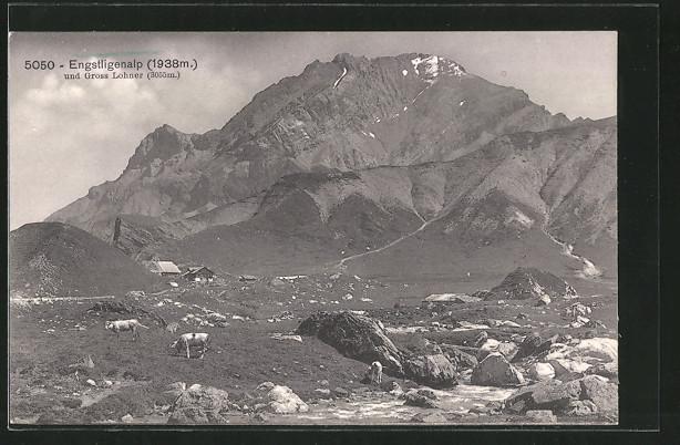 AK Engstligenalp, Panorama mit Kuhweide und Gross Lohner