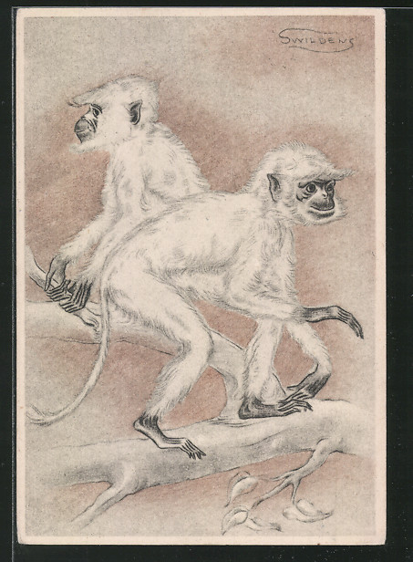 Künstler-AK Swildens: Weisse Affen auf einem Ast