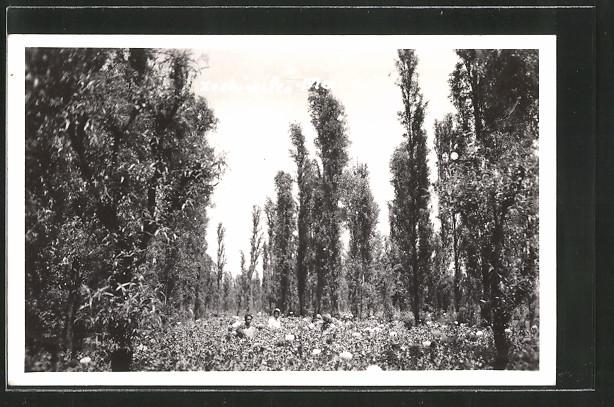 AK Xochimilco, Menschen auf einem Blumen-Feld im Wald
