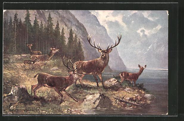 Künstler-AK M. Müller jun.: Hirsche und Rehe an einem Gebirgssee