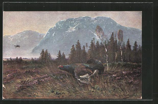 Künstler-AK M. Müller jun.: Auerhahn in einer Heidelandschaft beim Gebirge