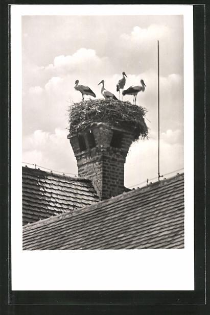 AK Heppenheim, Storchennest auf Hotel