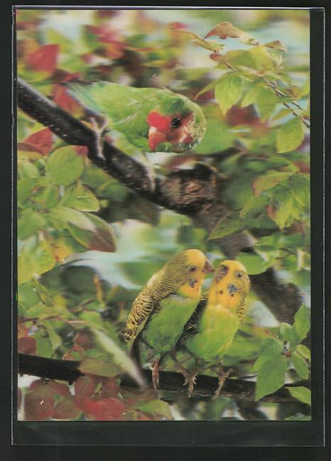 3D-AK Papageien auf einem Ast