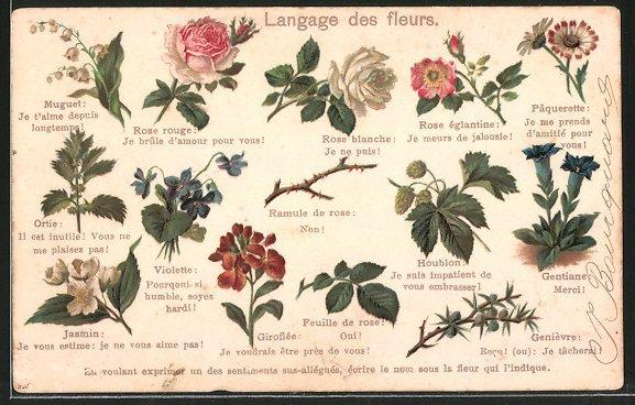 lithographie langage des fleurs blumensprache rosen veilchen enzian jasmin nr 6737344. Black Bedroom Furniture Sets. Home Design Ideas