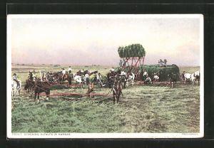 AK Kansas, KS, Stacking Alfalfa, Luzerne-Ernte