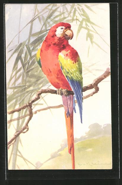 Künstler-AK Catharina Klein: Roter Ara auf einem Ast, Papagei