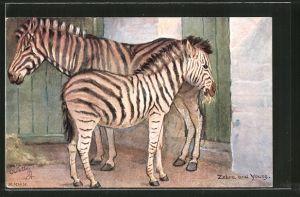 Künstler-AK Zebra and Young, Zebra mit Fohlen im Zoo