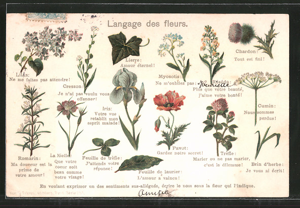Lithographie Langage des fleurs, Blumensprache, Iris, Lierre, Chardon, Cumin, Lilas, Cresson