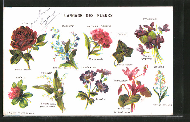Lithographie Langage des Fleurs, Blumensprache, Rose, Mjosotis, Oeillet Double, Liezze, Violette
