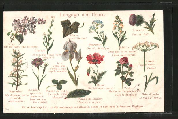 Lithographie Langage des fleurs, Blumensprache, verschiedene Blüten und ihre Bedeutung, Lierre, Myosotis, Réséda, Cumin