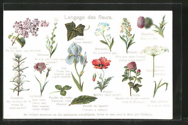 Fachgutachten die fremdenverkehrswirtschaftliche bedeutung des nationalparks nr 173017854066 - Langage des fleurs iris ...