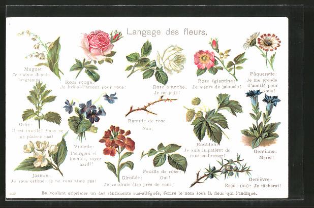 AK Le Langage des fleurs, Blumensprache, diverse Blüten und deren Bedeutung
