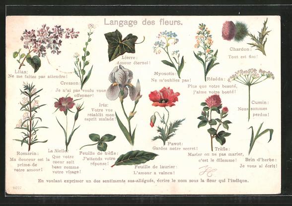 Lithographie Langage des fleurs, Blumensprache, Lierre, Iris, Cresson, Lilas, La Nielle, Chardon, Trèfle, Brin d'herbe