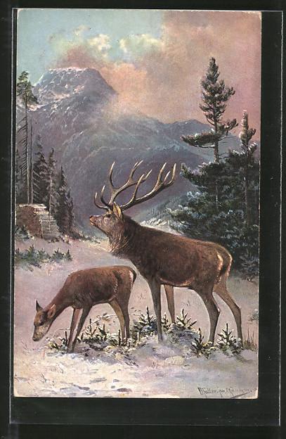 Künstler-AK M. Müller jun.: Hirsch und Hirschkuh im winterlichen Gebirge