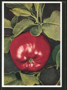 AK ein roter Apfel