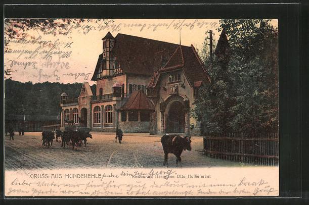 AK Berlin-Grunewald, Kühe vorm Gasthaus Hundekehle