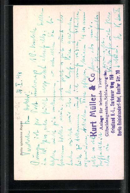Der artikel mit der oldthing id 39 25303477 39 ist aktuell for Siamesische kampffische