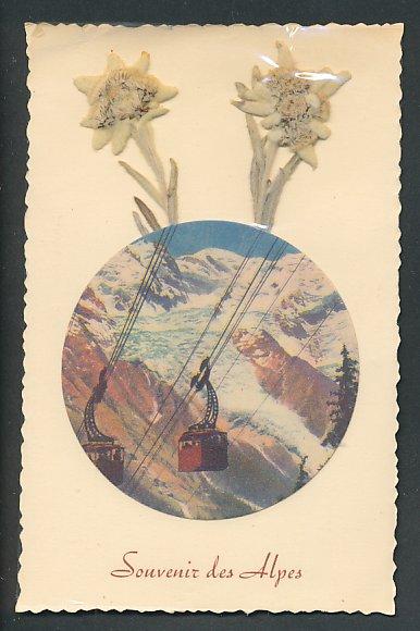 Trockenblumen-AK Seilbahn mit Gletscherblick, Edelweiss als Trockenblumen