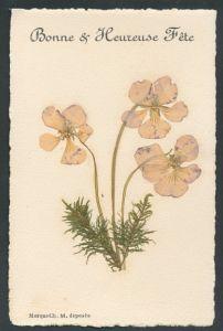 Trockenblumen-AK Getrocknete Stiefmütterchen und Moos,